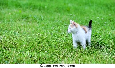 cute three color kitten on the grass