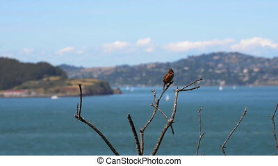 Little Bird against San Francisco Bay - Slow pan away from...