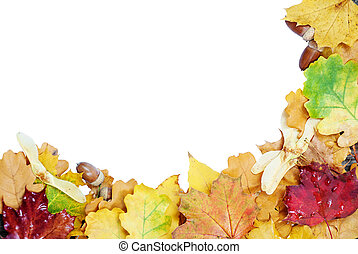 Autumn leaves on a white background - Frame of multicolored...