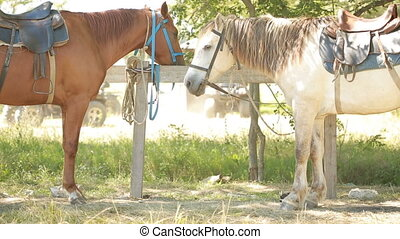 Horses tied to rail - several horses tied to a rail