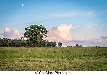 Latvian rural landscape at sunset