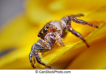 Jumping spider nature - Spider eyes are the best among all...