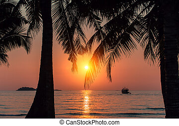 Beautiful blood-red sunset on the coast through palm leaves