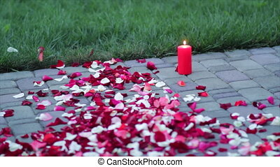 Rose petals on the pavement