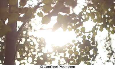 Backdrop of Green Leaves Background with Sun Light Bright -...
