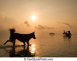 Perspectives silhouette of happy dog running in the sea at sunrise in summer time with long tail fishing boat reflect with water sea in background. (selective focus)