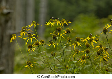Wildflowers, Clingmans Dome, Great Smoky Mtns - Wildflowers,...