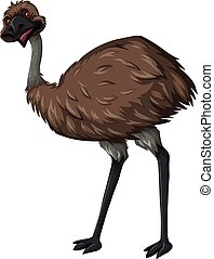 Emu bird with brown feather illustration