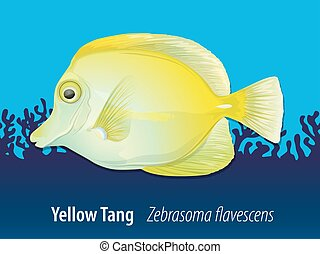Yellow Tang swimming in the ocean illustration