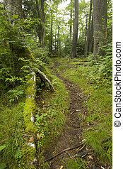 Clingmans Dome area, Great Smoky Mtns - Clingmans Dome area,...