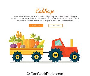 Cabbage Farm Web Vector Banner in Flat Design. - Cabbage...