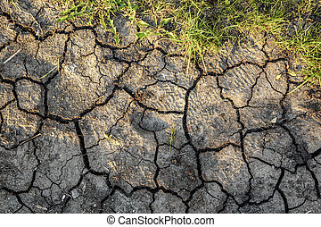 Dry soil with green moss as background
