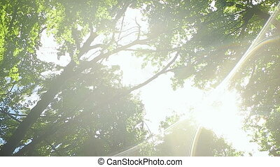 Look up to the Crown of the Tree - Sun rays shinning through...