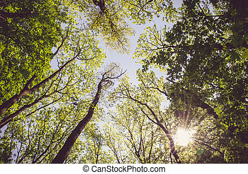 sun shining in the forest - tall green spring forest and sun...