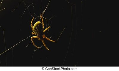 The spider weaves a web of near lantern - The spider weaves...