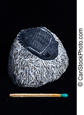 trilobite fossil - small trilobite fossil still embedded in...