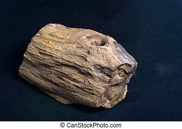 petrified wood - piece of petrified wood