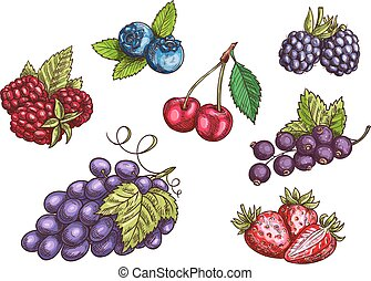 Berries fruits set, color sketches - Berries set Hand drawn...