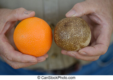 fossilised orange - A remarkable fossil of an orange from...
