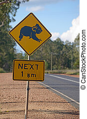 koalas cross here - Sign warns of koalas crossing the road...