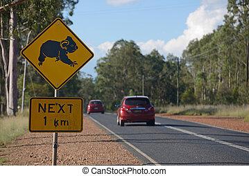 cruz, aquí,  Koalas