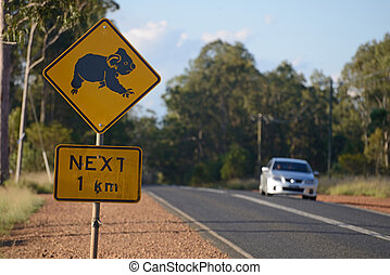 Koalas, cruz, aquí