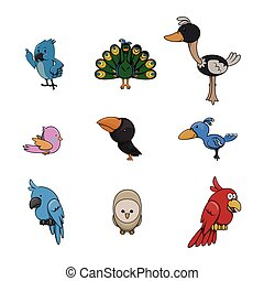 birds illustration design collection