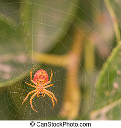 Under View of a Spider - Macro of the underside of a spider...