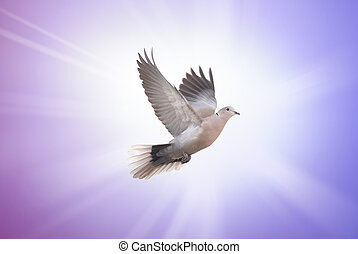 Beautiful dove symbol of faith