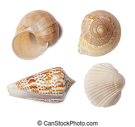 Set of sea shells isolated on white