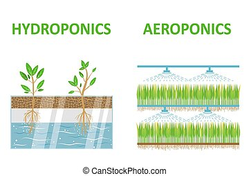 Aeroponic and hydroponic systems. Colored flat vector...