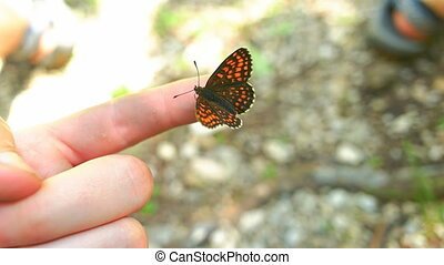 Butterfly Sitting on Mans Hand - Butterfly flew to a mans...