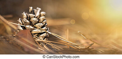 Beautiful pine cone in the forest - close up