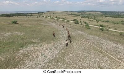 pasture on a mountain plateau - horse running on the road on...