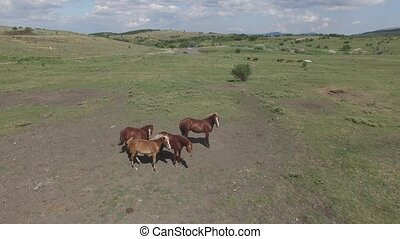 pasture on a mountain plateau - horses in the pasture near...
