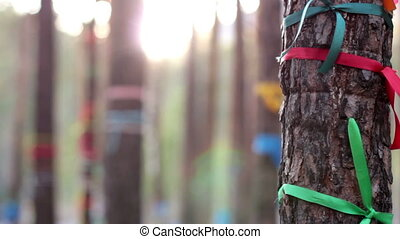 Magic trees decorated with ribbons, traditional wish trees, tourist attraction