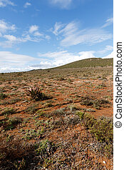 It's Still Dry in Oudtshoorn, the ostrich capital of the...