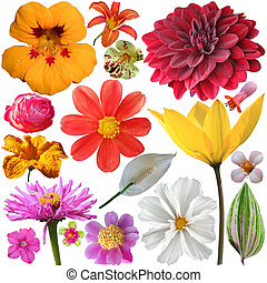 set of summer flowers on a white background