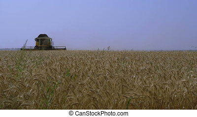 Combine-harvester gathers the wheat