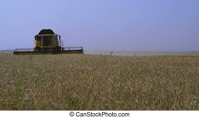 Combine-harvester gathers the wheat - Combine-harvester...