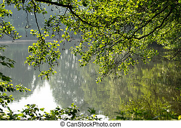 Nature - small lake with trees in the sunlight