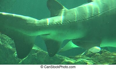 Shark Tail And Fins Underwater