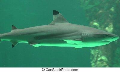 Shark Marine Life And Predatory Animals