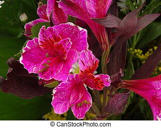 Flor de una comunidad pequea de Oaxaca