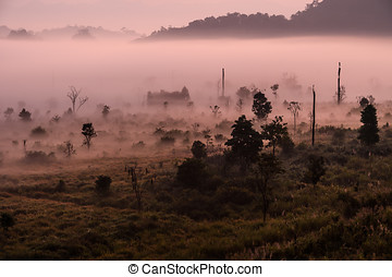 Beauty of nature in world heritage site, Thungyai Naresuan forest,Thailand