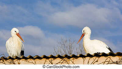 storks - storks breeding (Centre de Reintroduction des...