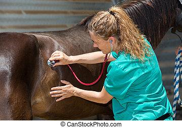 Veterinary horses on the farm - Young veterinarian...