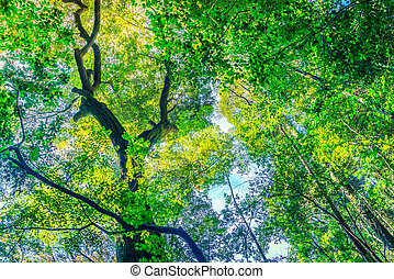Forest trees ( Filtered image processed vintage effect. ) -...