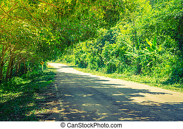 Way in forest Filtered image processed vintage effect - Way...