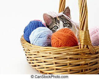 gato, juego, hilo
